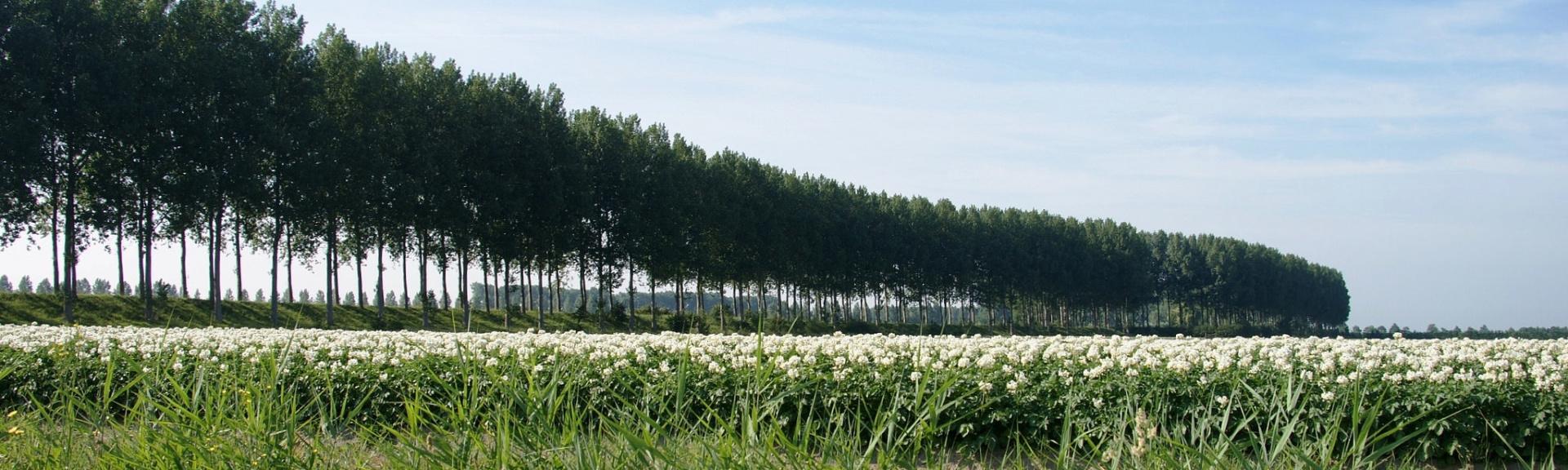 Graauw polder, kreken en dijken